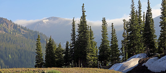 Pine trees on a hill with a mountain top in the distance